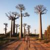 MADAGASCAR, dove la natura domina incontrastata
